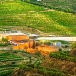 Bick auf den Weinkeller der Quinta do Vallado