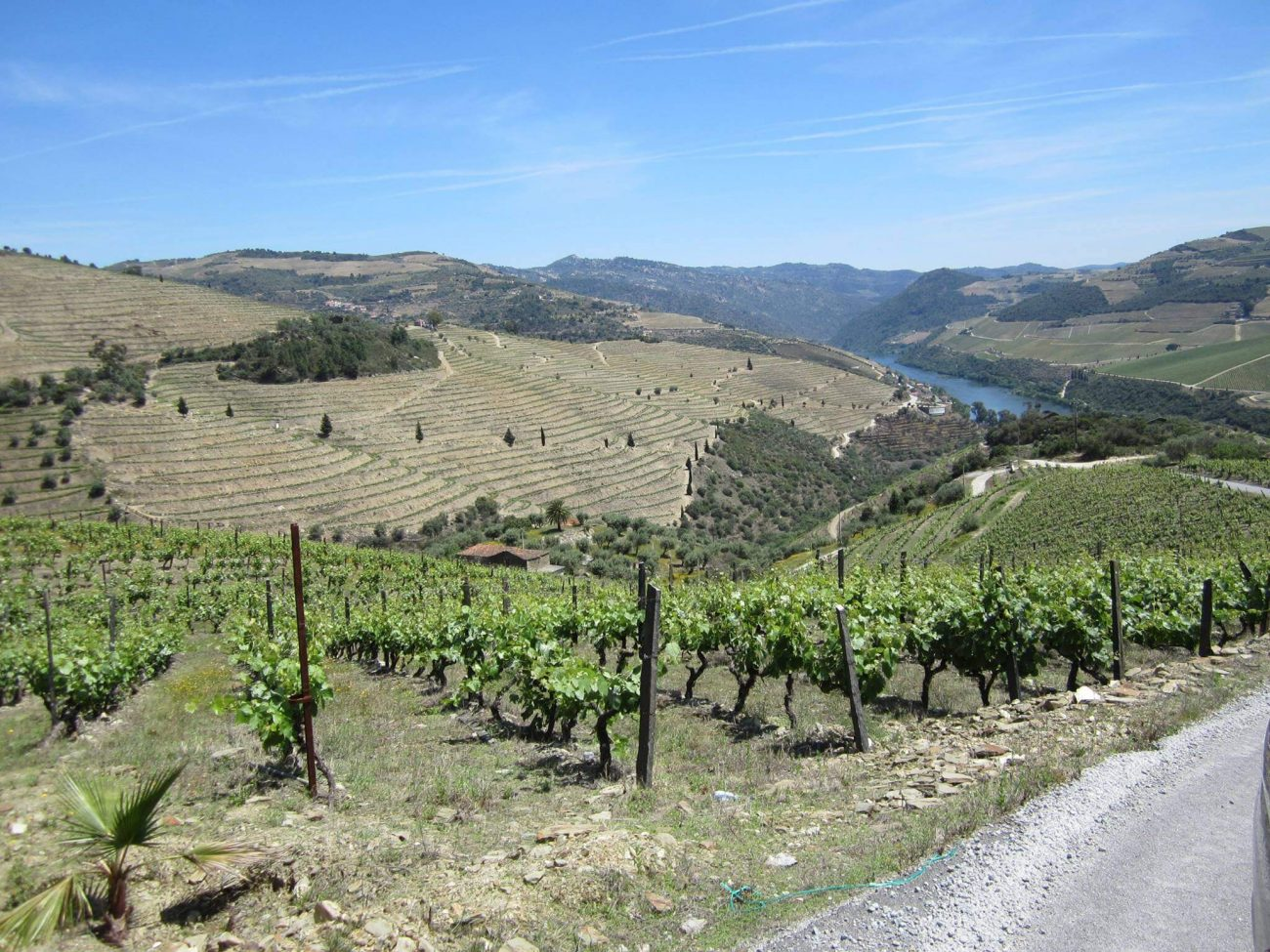 Portugal Douro Weingebiet Pinhao Aussichtspunkt Quinta das Carvalhas Real Companha Velha Portweinhaus