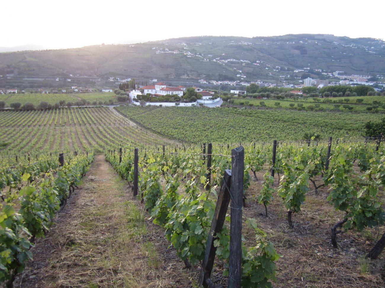 Blick auf das Weingut Quinta de Tourais für ein Weinwochenende