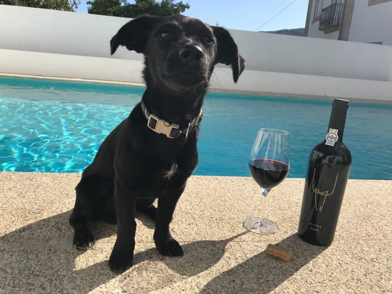 Portugal Douro Weingut Quinta de Tourais Hund Name vom Wein Miura