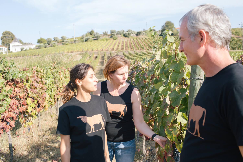 Trauben verkosten mit Fernando Coelho in den Weinbergen der Quinta de Tourais