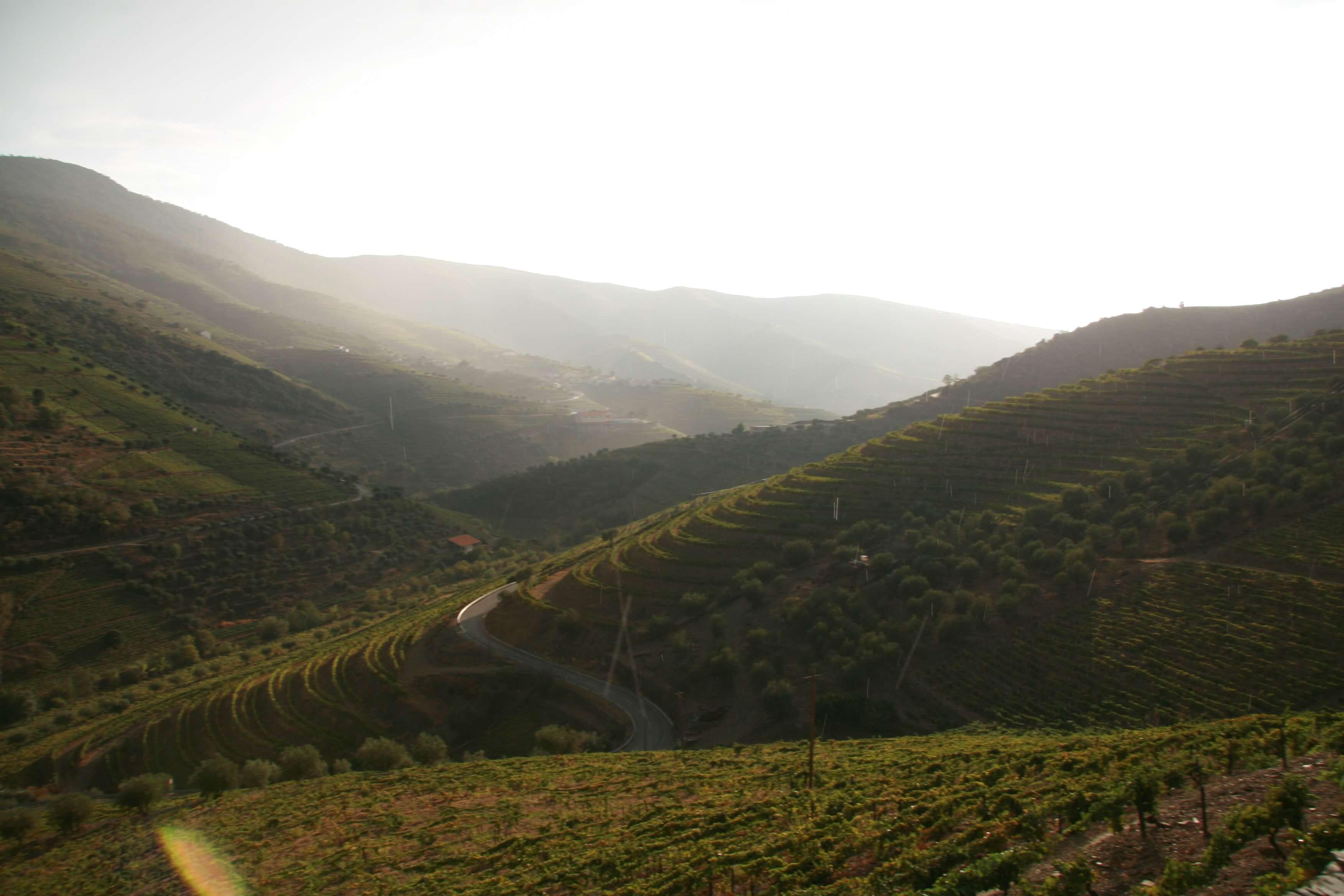Spannende Rotweine wachsen im Douro-Tal