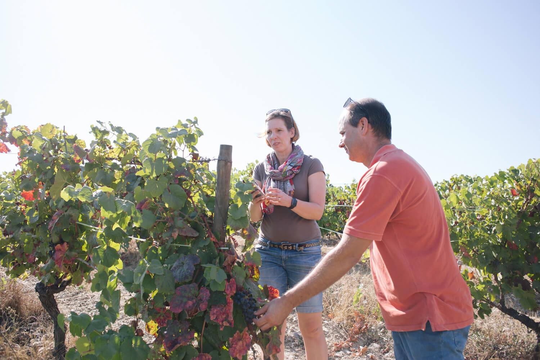 Trauben probieren auf der Quinta da Prelada